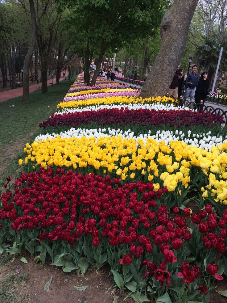 Minden tavasszal virágba borul Isztambul. Csodás látvány a Tulipán Fesztivál az Emirgan  parkban
