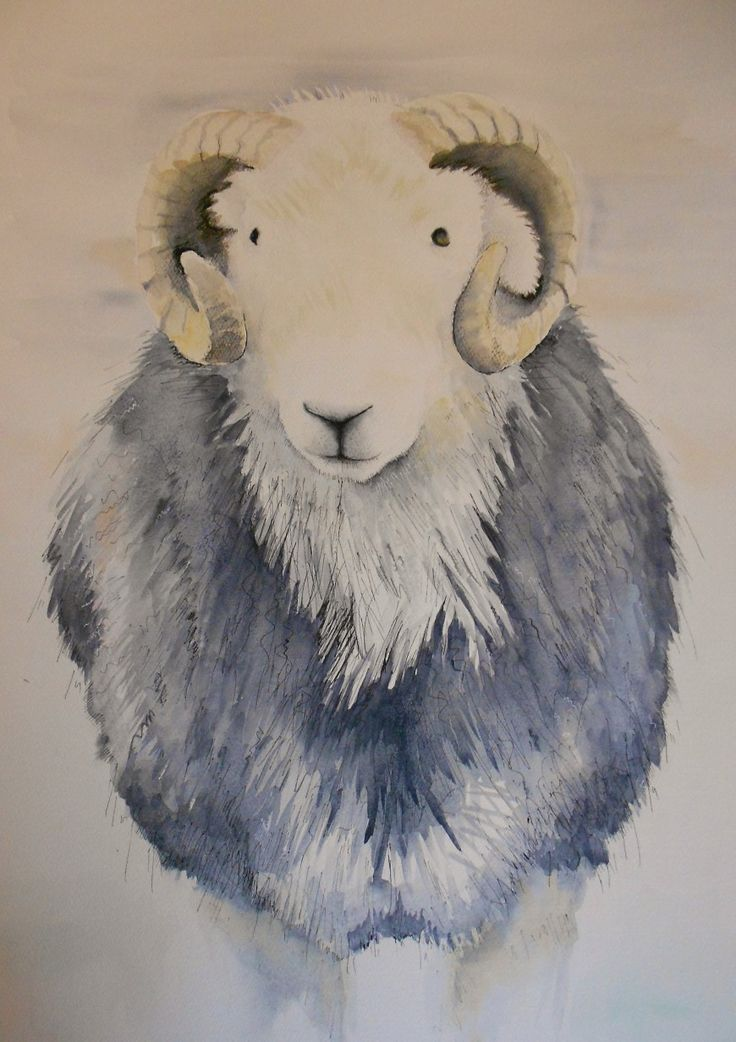 'Colin' a Herdwick tup commission recently completed www.beccafielding.com