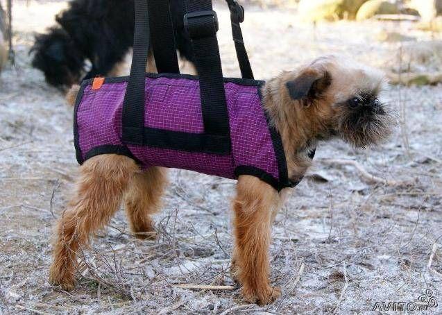 Инвалидные коляски для собак разных пород - купить, продать или отдать в Санкт-Петербурге на Avito — Объявления на сайте Avito