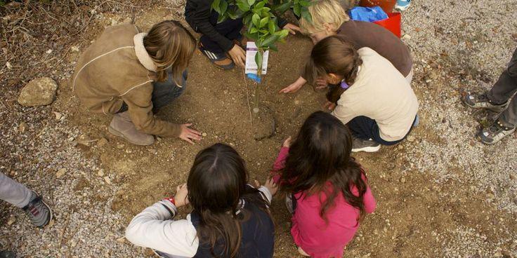 Plantant un arbre Planting a tree