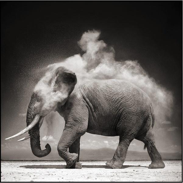 By: Nick Brandt: Photos, Elephants, Animals, Exploding Dust, Nick Brandt, Art, Nickbrandt, Photography, Black