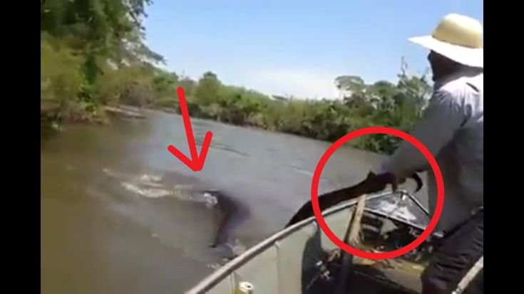 Brazilian man grabs a GIANT ANACONDA by the tail, on the Amazon river