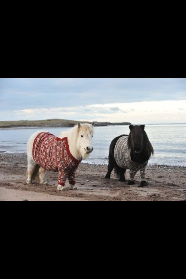 81 best Horses images on Pinterest | Beautiful horses, Do it ...