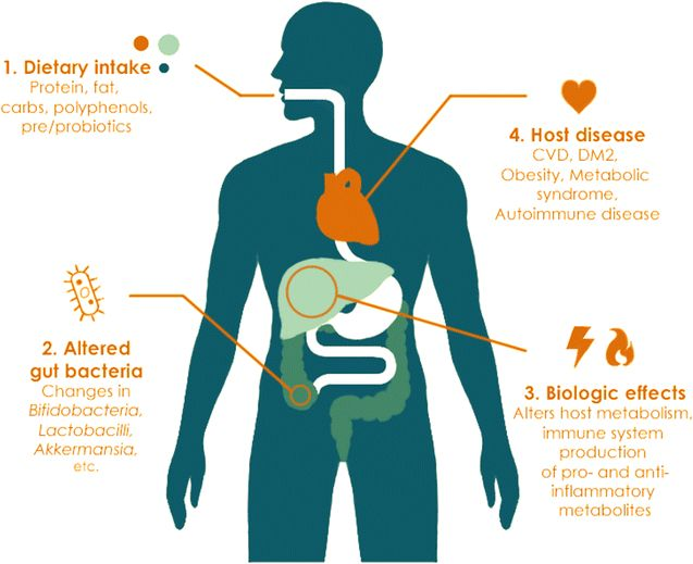 Influence of diet on the gut microbiome and implications for human health. Journal of Translational Medicine