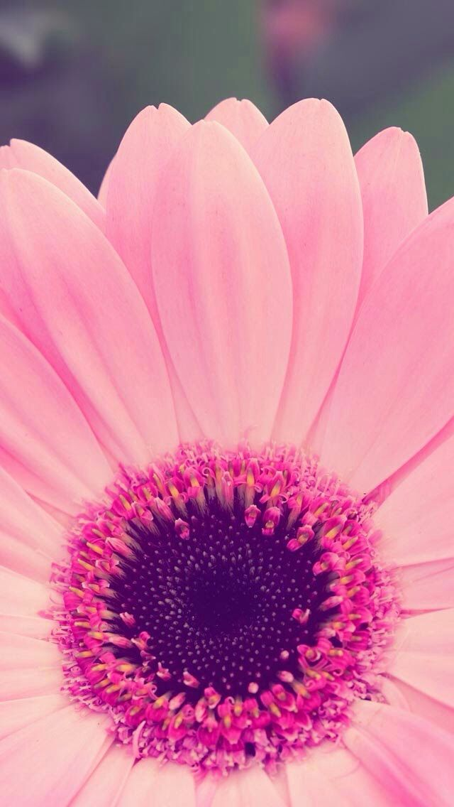 Cute flower wallpaper