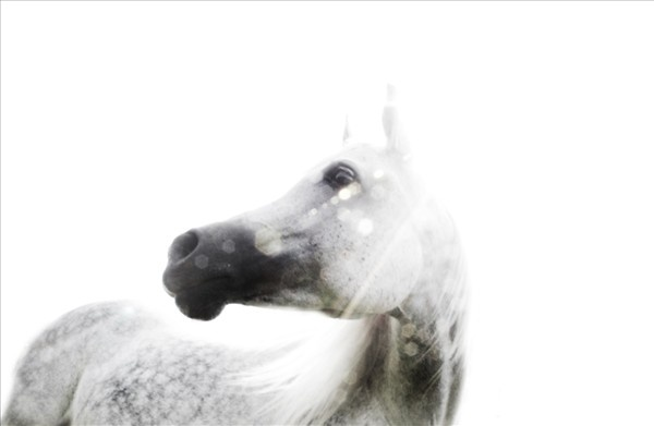 """The Rolling Stones – """"Horse Power"""" – By Sebastiano Vitale – MY NAME IS KHAN.ca"""
