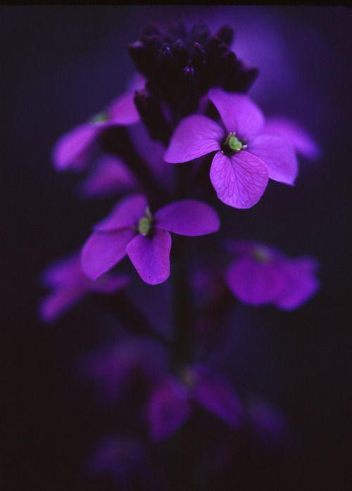 Color Morado - Purple!!!