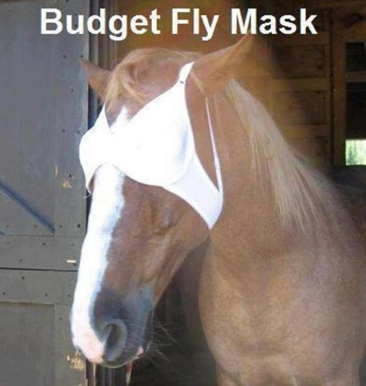 When times get tough.... You'll do anything for your horse!  #aww #horse #diy