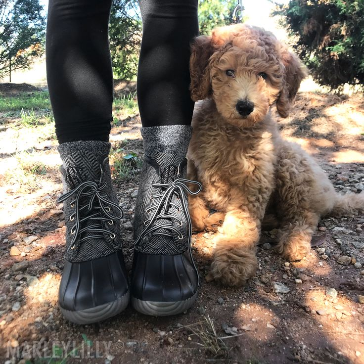 puppies + duck boots