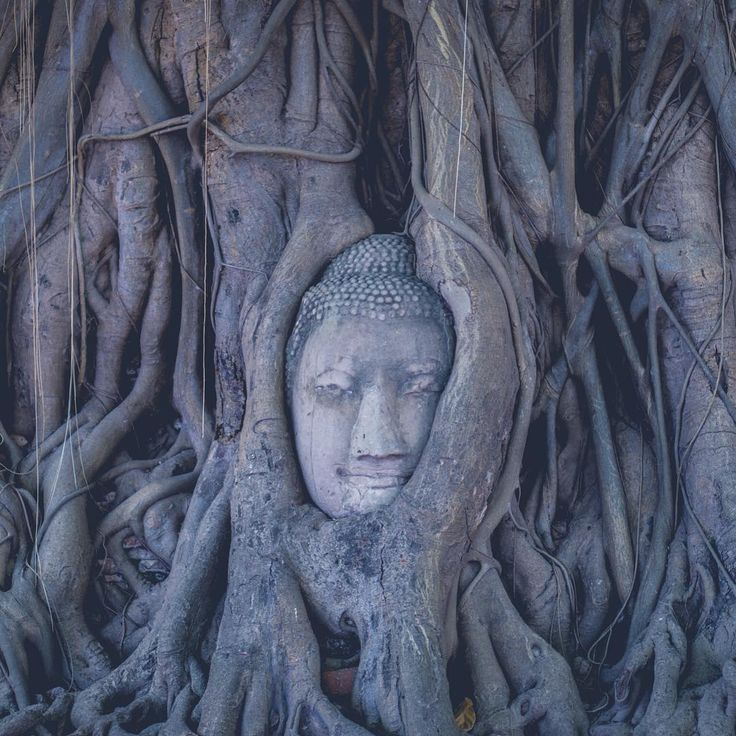 Inside the ancient Wat Mahathat || #bangkok #thailand #amzthld #ig_thailandia #igs_asia #travel