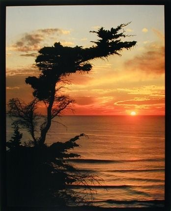 Ocean Sunrise At the Lone Cypress Point Landscape Nature Tree Wall Decor Art Print Poster (16x20) - Impact Posters Gallery