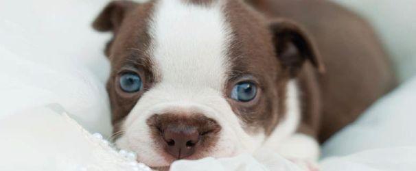 Köpek Yavruları Hangi Hızla Gelişir   Köpekler Hakkında Herşey