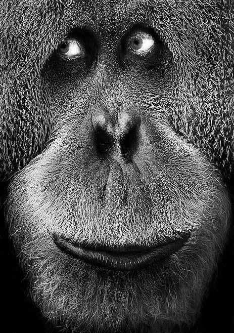 """"""" Ci è più di conforto ritenere che siamo una piccola evoluzione della scimmia che un tale decadimento degli angeli.""""  ( Finley Peter Dunne )"""