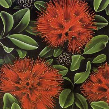 Pohutukawa by Diana Adams. The pohutukawa flowers at Christmas time and is also known as the New Zealand christmas tree.