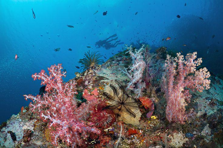 Liberty Wreck reefscape & jackfish school | by Luko GR