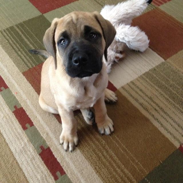 My baby Titus at 10 weeks10 Weeks, Baby Titus