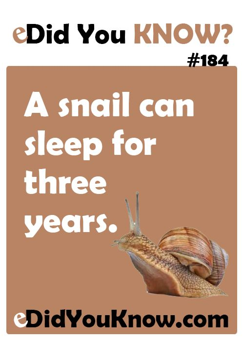 A snail can sleep for three years. http://edidyouknow.com/did-you-know-184/