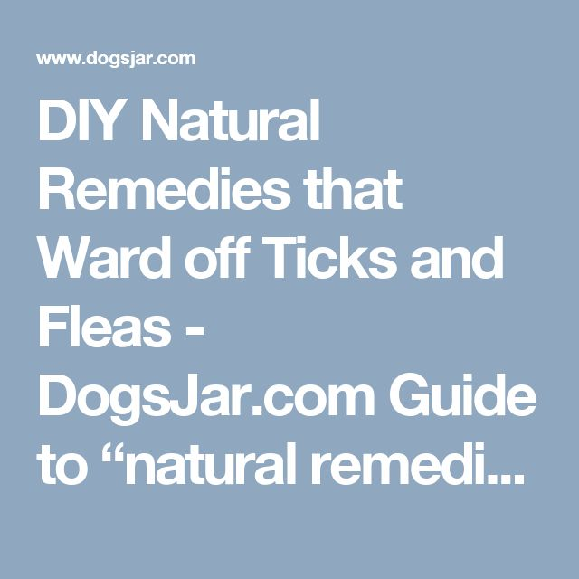"DIY Natural Remedies that Ward off Ticks and Fleas - DogsJar.com  Guide to ""natural remedies for ticks, natural remedies for ticks on dogs, natural solutions for ticks on dogs, natural remedies for ticks and fleas, natural ideas against ticks, natural remedies against ticks and fleas, natural remedies for fleas and ticks on dogs, natural solutions for ticks, natural ideas for ticks on dogs, natural ideas for ticks on dogs, natural remedies for ticks in the yard, natural ideas for ticks in…"