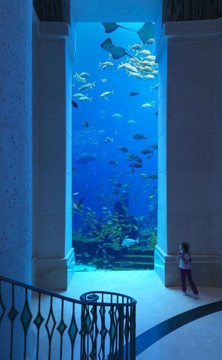 Aquarium wall: Dubai's underwater hotel. The hotel's suites provide views from both the bedroom and the bathroom windows into a lagoon filled with 65000 marine animals. AMAZING!