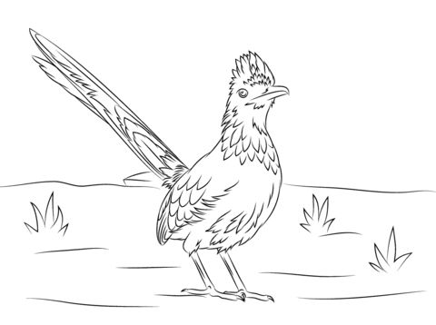 Greater Roadrunner Bird coloring page from Roadrunner category. Select from 25887 printable crafts of cartoons, nature, animals, Bible and many more.