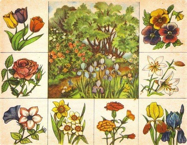 Ботаническое лото - Игры с детьми - Babyblog.ru
