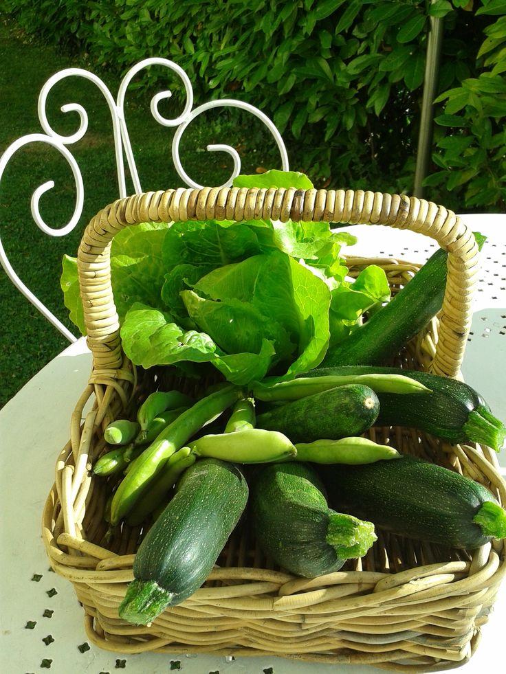 Potager/Première récolte du potager