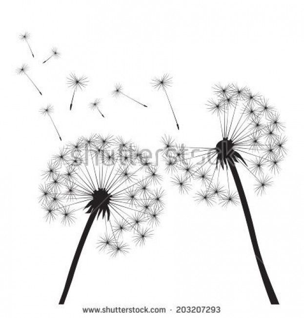 Background Dandelions Flowers Drawns Vector Black White Onblack Vector Dandelions On White Background Dandelion Dandelion Art White Background