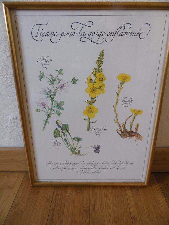 Planche botanique sous verre encadrée  Tisane pour la par MadeinFlo