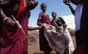 Tanzania Condemned for Violence Against Maasai - The European parliament strongly condemned the Tanzanian government in a resolution adopted on March 12th, for years of violence against the Maasai and violating their human rights. Recently, in January 200 shelters were destroyed by the Tanzanian authorities and a large amount of stock disposed of, leaving 3,000 Maasai destitute and left homeless. Earlier, in 2009 at Cordaid's initiative, members of EU delegations visited Loliondo villages…