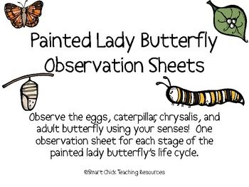 Painted lady butterfly diagram - photo#24