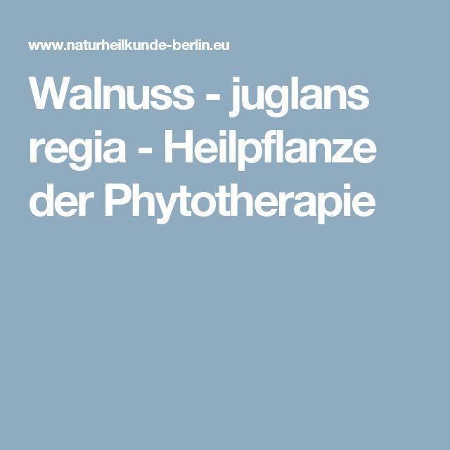 Walnuss - juglans regia - Heilpflanze der Phytotherapie