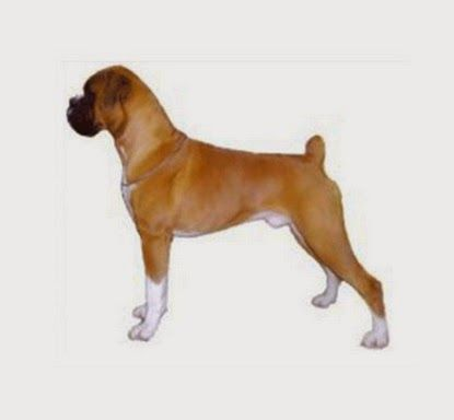Tips For Finding the Perfect Purebred Dog Or Puppy ~ Rosy and Rocky Pet Supply
