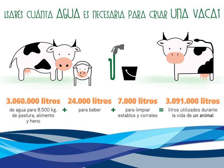 Para criar los animales que nos dan alimentos tambi n se for Que se necesita para criar tilapias
