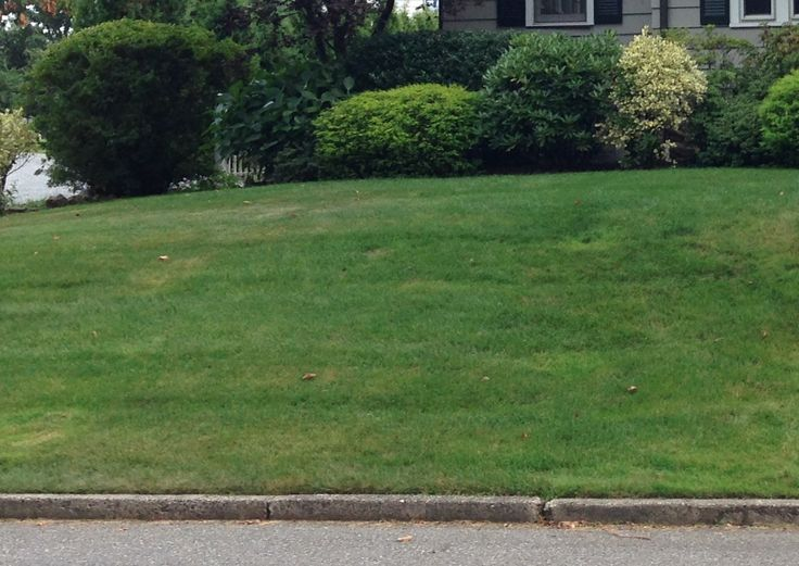 Lush Green Lawns are NOT Natural!  and they are a significant source of air and water pollution.