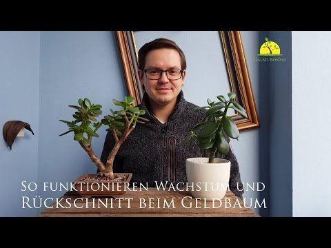 Geldbaum (Crassula ovata) | Bonsai Basics #1 | Der Weg zum eigenen Bonsai - YouTube