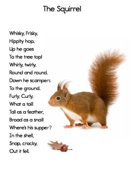 With winter approaching, children will enjoy reading poems about animals preparing for cold weather. Here is a fun poem about a squirrel. It's perfect for first and second graders. There are two versions, one with and one without an illustration.