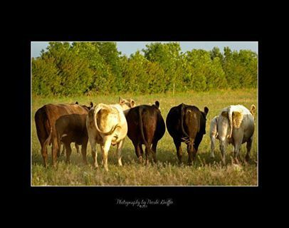 Moo.  Photography by Nicole Griffin