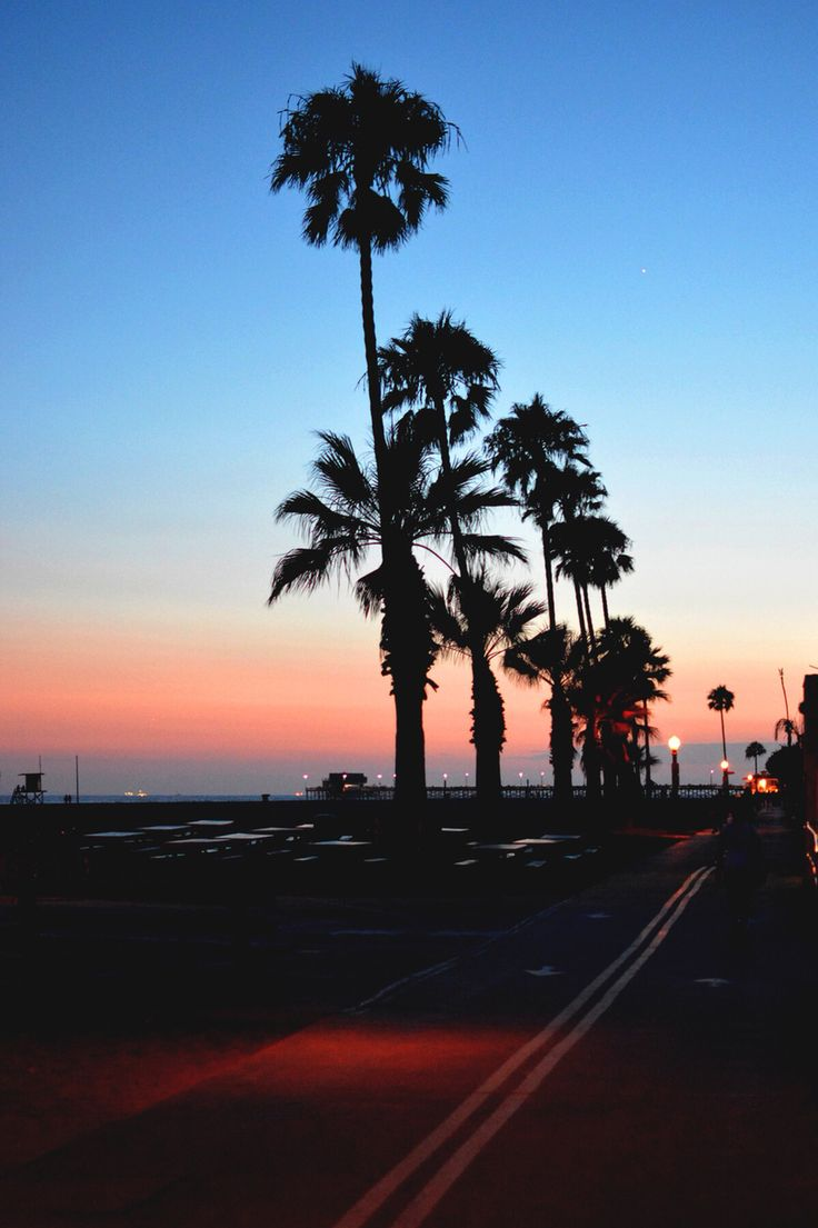 207 Best Palm Trees Images On Pinterest
