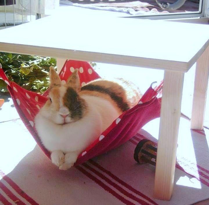 Kuschelsachenset 3 Teile für Kaninchen, diverse Muster/Farben