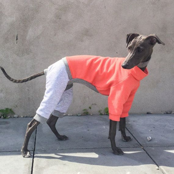 577 best Sighthounds images on Pinterest | Greyhounds ...