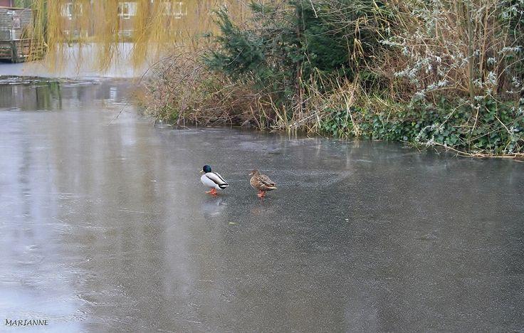 Winter in Zoetermeer