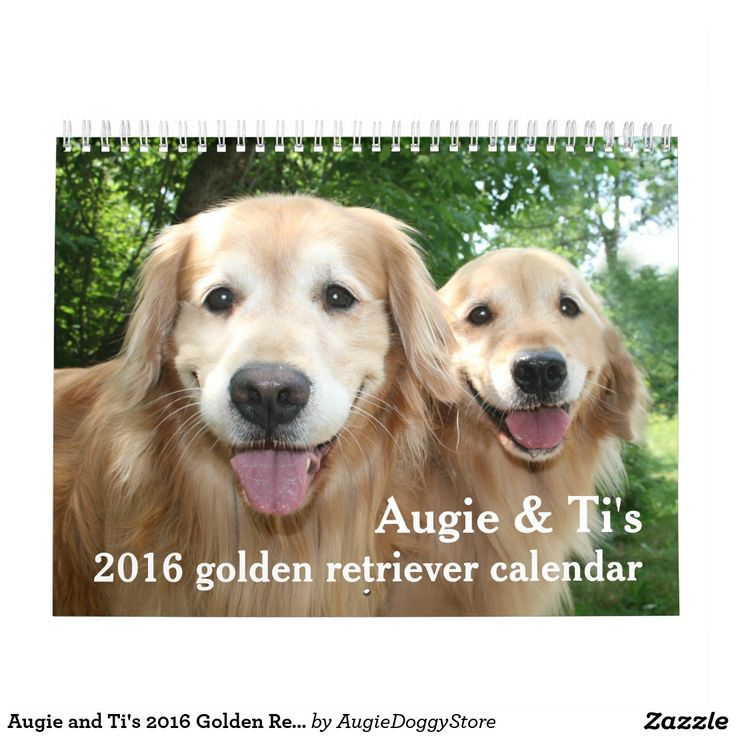Augie and Ti's 2016 Golden Retriever Dog Calendar