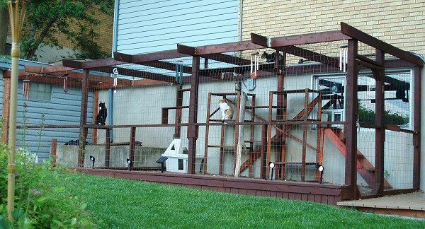 I Could Totally Build This In Our Side Yard Kitters Would Love It