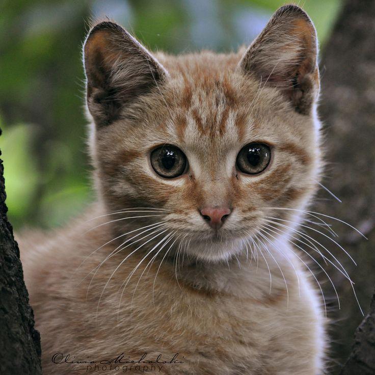 Ain't I cute? -