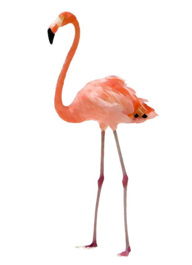 sarah m. dorsey designs: Hump day giveaway | Flamingo Printable