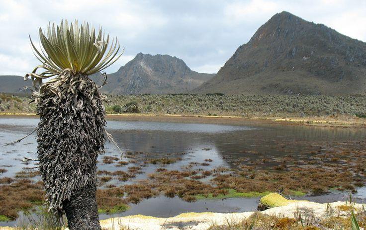 Parque Sumapaz, Tesoro Natural de Bogotá @Descubriendo 7 Tesoros Naturales en Bogotá