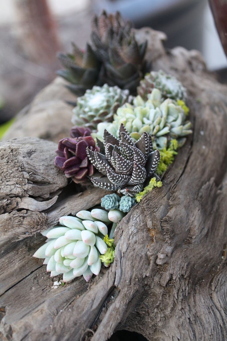 driftwood design living walls driftwood planters and