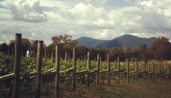 Yarra Valley Provides A Wealth Of Wine, Wombats, And Wallabies