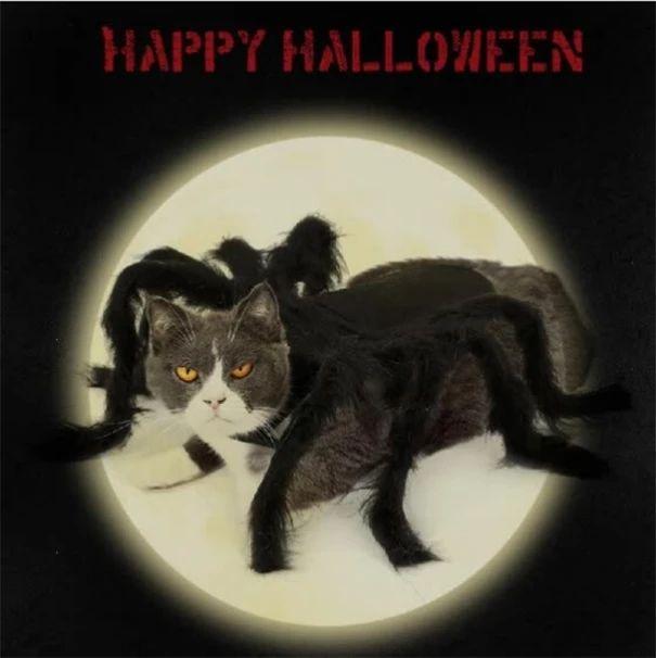 Halloween Pet Spider Clothes Puppy Plush Spider Cosplay Disfraz (COMPRAR 1 OBTENER 2ND 10% DE DESCUENTO)   – Anleitungen