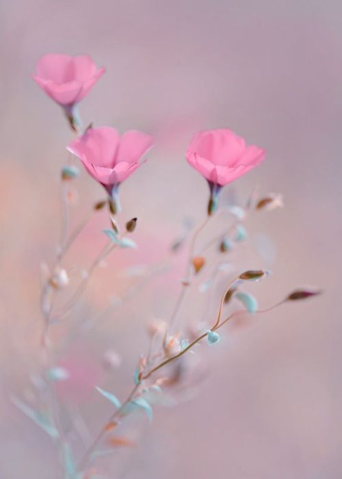rachael-of-rose:    Dreaming in Blush by Magdalena Wasiczek.